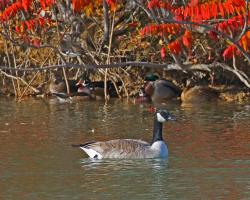 Wilson Springs Ponds