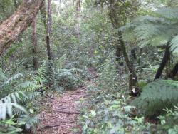 Jubilee Creek picnic site and walk