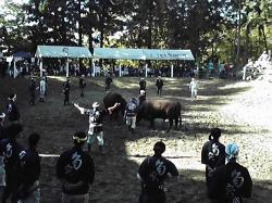 Yamakoshi Bullring