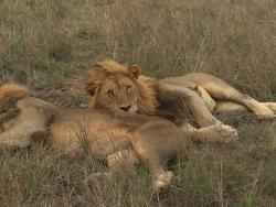 Amazing game drives. Big 5 in one day.