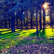 Parco Arcadia