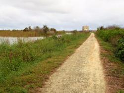Lake Apopka Loop Trail