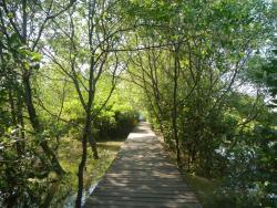 Ekowisata Mangrove Wonorejo