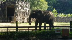 A day at the Mayaguez Zoo