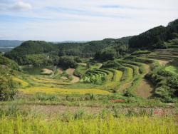 Kitasho no Tanada