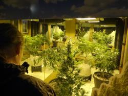 Musée du Haschich, de la Marijuana et du Chanvre