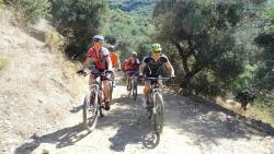mountain bike tour throgh the olive forest
