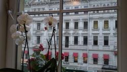 view from the dining room, live orchids