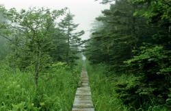 Ochiishi Cape Foot Path