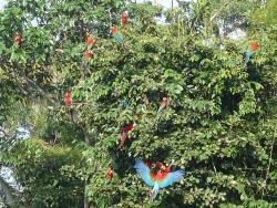 Sammlung in den Bäumen der natürlichen Lehmlecke - darauf wollten wir nicht verzichten