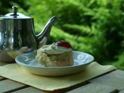 Marwood Hill Garden Tea Room