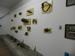 Museum Pampano