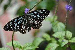 Maolin National Park Purple Butterfly Valley