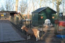 Kinderboerderij Velserbeek