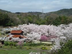 Seishinji Temple and Seishinji Park