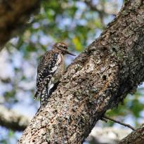 Hilton Head Island Birding Trail