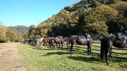 Centro Equestre Il Sorriso di Bassano