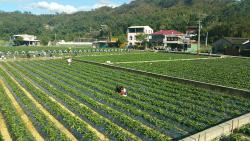 Yixiya Strawberry Farm