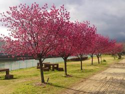 Wakagawa Kasen Park