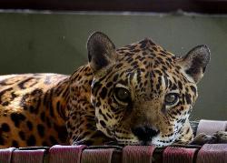 Zoologico do Batalhao do Forte Sao Joaquim