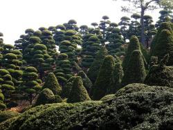 Bear Tree Park