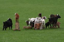 Willow Creek Miniature Goats
