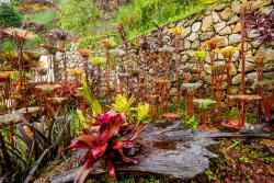 Art and Garden