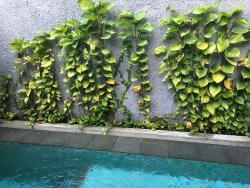 Plunge pool greenery