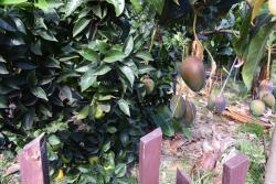 Jardin de Frutas Tropicales