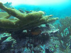 Escuela de Buceo Guardianes del Coral