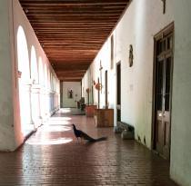 旧金山修道院和博物馆