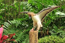 Philippine Eagle Center