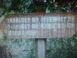 Yakushima Eco Tour