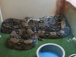 West Australian Reptile Park