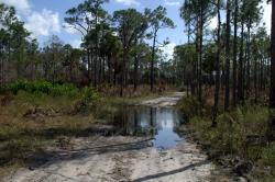 Cypress Creek Natural Area