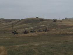 Montana Wild Guest Ranch & Hunting Preserve