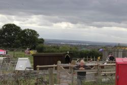Hadleigh Farm - Rare Breeds Centre