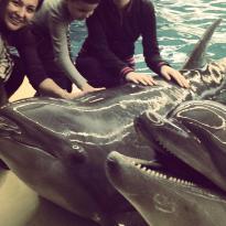 Dolphinarium