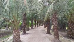 Museo del Palmeral Huerto de San Placido