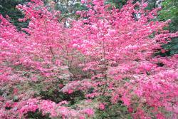 Sarvar Arboretum