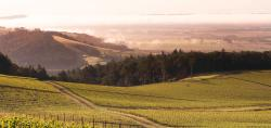 The Historic Hyland Vineyard (Stunning landscape)