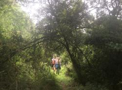 Beautiful forest walks