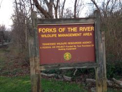 Forks of the River Wildlife Management Area