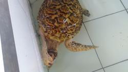 Sea Turtle Conservation Negara