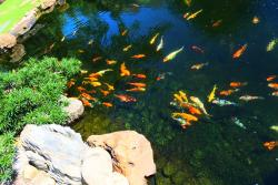 They have real fish in the pond :)