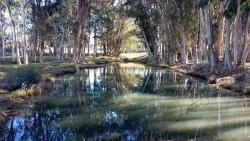 Sweet Springs Nature Preserve