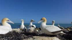 Gannet Beach Adventures