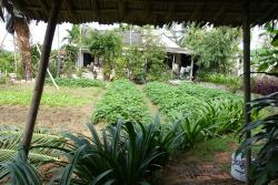 The vegetable gardens