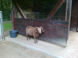 Zoo Kaiserslautern