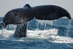 The Whales (Las Ballenas)